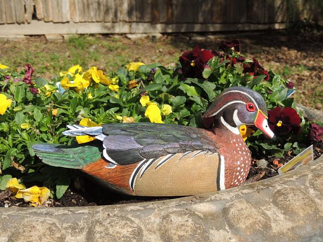 Carving of Wood Duck Drake