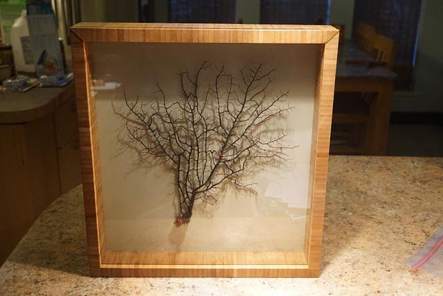 Shadow box. - Woodworking Project by Madts