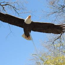 Soaring Bald Eagle - Carving - Woodworking Project by Rolando Pupo