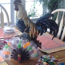Turkey Pop - Woodworking Project by David A Sylvester