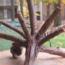 Imagine - Woodworking Project by Harvey  Daniels