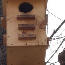 Squirrel nesting box. - Woodworking Project by roughframe