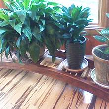 Plant Stand - Woodworking Project by Michael De Petro