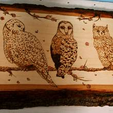 Three Owls On A Branch with Watercolor - Woodworking Project by CharleeAnn