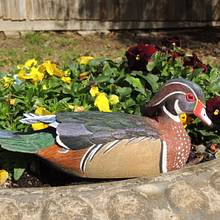 Carving of Wood Duck Drake - Woodworking Project by Rolando Pupo