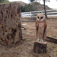 Barn Owl  - Woodworking Project by Payneproduced